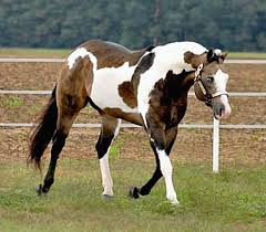 best 25 painted horses ideas on pinterest horses pretty horses