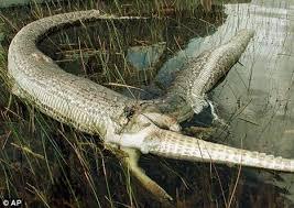 Crocodile Meme - interior crocodile alligator