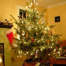 potted christmas tree how to care for your living christmas tree hgtv