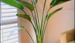 Indoor House Plant Appealing Indoor House Plants Utah Tags Indoor House Plants