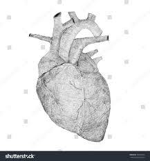 black white pencil sketch human heart stock illustration 364354334