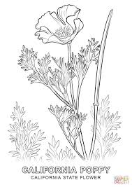 california state flower coloring page free printable coloring pages