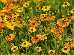10 best august peaking plants saga