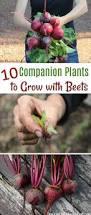24 best garden images on pinterest gardening plants and garden