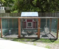Backyard Chicken Coops Australia by Best Chickens For Backyards Backyard Decorations By Bodog