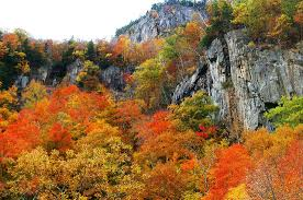 fall foliage train hampshire stunning