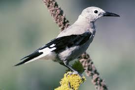 birding by region bird watcher u0027s digest