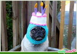 Happy Birthday Pug Meme - happy birthday pug blank template imgflip
