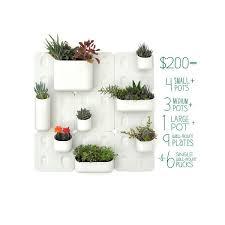 30 best outdoor plant ideas images on pinterest gardening