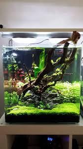 nano aquascape 55l nano aquascape uk aquatic plant society