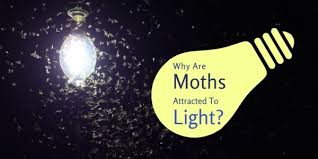 Are Spiders Attracted To Light Why Are Moths Attracted To Light Plunkett U0027s Pest Control