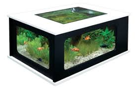 vivarium for sale aquarium terrarium u0026 vivarium supplies