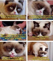 Grumpy Cat Meme No - 158 best grumpy cat memes images on pinterest funny animal