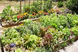 beautiful vegetable garden layouts u2013 home design and decorating