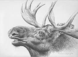 red deer sketch by makangeni on deviantart