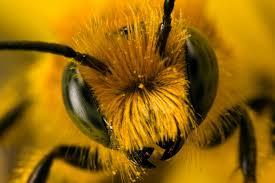 the prowling bee we u2013 bee and i u2013 live by the quaffing u2013