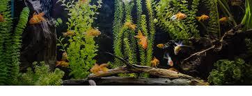 Decor Discount Lempdes by Aquariums Animalerie Jardiland