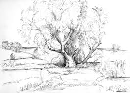 the old willow tree fine art drawings on paper 2014
