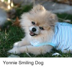 Smiling Dog Meme - yonnie smiling dog dog meme on me me