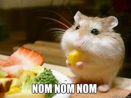 Nom Nom Nom Meme - nom nom nom nom nom nom hamster quickmeme