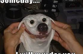 Animal Meme Pictures - animal funny dog meme funny pictures quotes memes funny