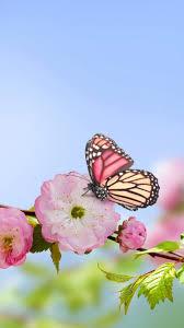 download wallpaper 750x1334 flowers butterflies spring bloom