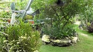 barney s hummingbird garden jamaica ii youtube