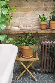 how to make bathroom plants work with minimal space low lighting