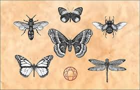 latest insect tattoo designs latest tattoo design images free