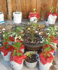 Self Watering Planters Self Watering Planters Diy Containers To Combat Drought