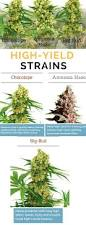 433 best ganja grow images on pinterest cannabis growing