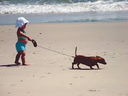 dog friendly beaches on the outer banks