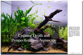 Small Tank Aquascaping Aquascaping World Magazine Creating Depth And Perspectve In An