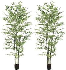 cheap real potted trees find real potted trees