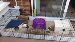 Cages For Guinea Pigs Guinea Pig Care The Littlest Rescue