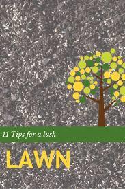 best 25 lawn fertilizer spreader ideas on pinterest grass