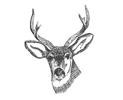 clipart deer head