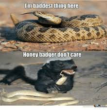 Meme Honey Badger - i m baddest thing here honey badger dont care memecentercom meme