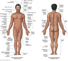 chapter 1 the human body an overview lessons tes teach