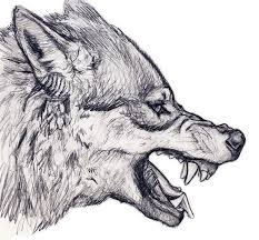 drawn werewolf snarling wolf pencil and in color drawn werewolf