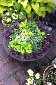 mini hostas in a container at savory gardens in edina mn