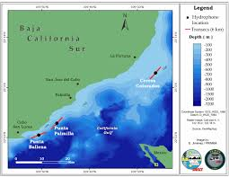 Cabo San Lucas Mexico Map by Humpback Whale Study Off Cabo San Lucas Mexico Thode Underwater