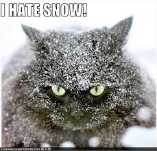 Hate Snow Meme - 124 best i hate snow images on pinterest ha ha funny stuff and