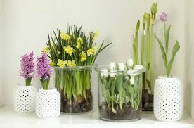 Spring Decorations For The Home Spring Decorating Ideas Refresh Your Home With Spring Flowering Bulbs