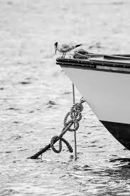 black and white u2014 likka photography