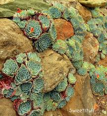 71 best succulent time images on pinterest propagating