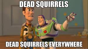 Dead Squirrel Meme - dead squirrels dead squirrels everywhere everywhere quickmeme