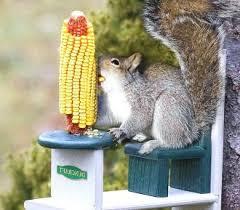 ornamental bird feeder how to keep squirrels away from bird