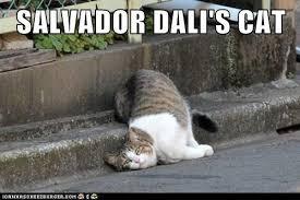 Funny Salvadorian Memes - salvador dali s cat lolcats lol cat memes funny cats funny
