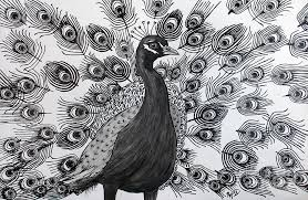drawn peafowl pen pencil and in color drawn peafowl pen